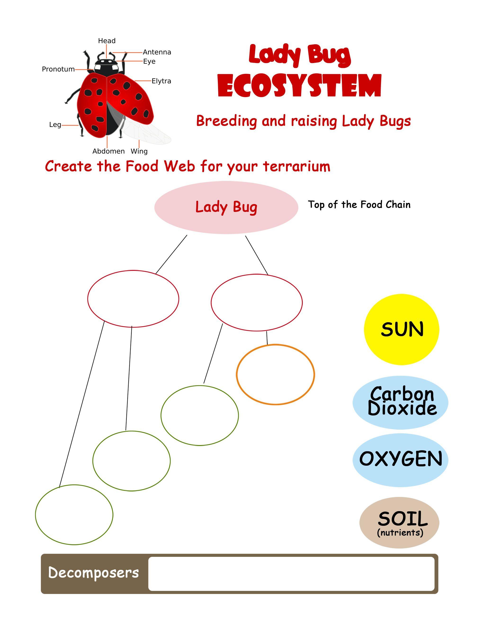 Ecosystem Worksheets 4th Grade Ladybug Ecosystem Worksheet