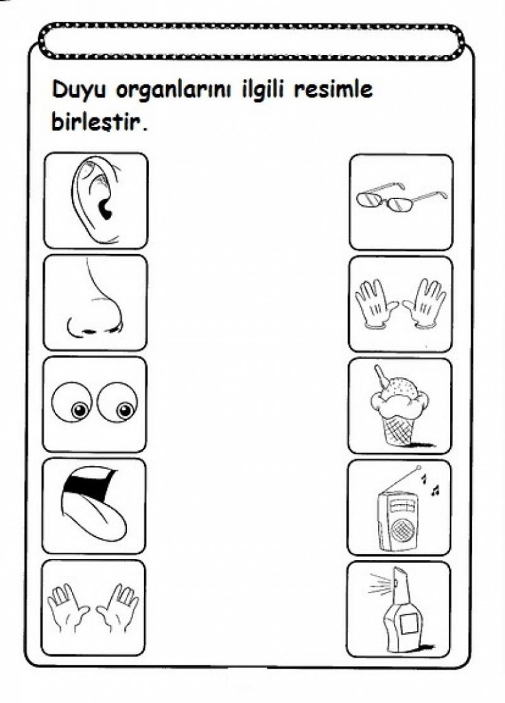Five Senses Kindergarten Worksheet Five Sense Worksheet