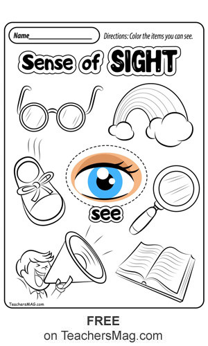 Five Senses Kindergarten Worksheet Free Five Senses Worksheets