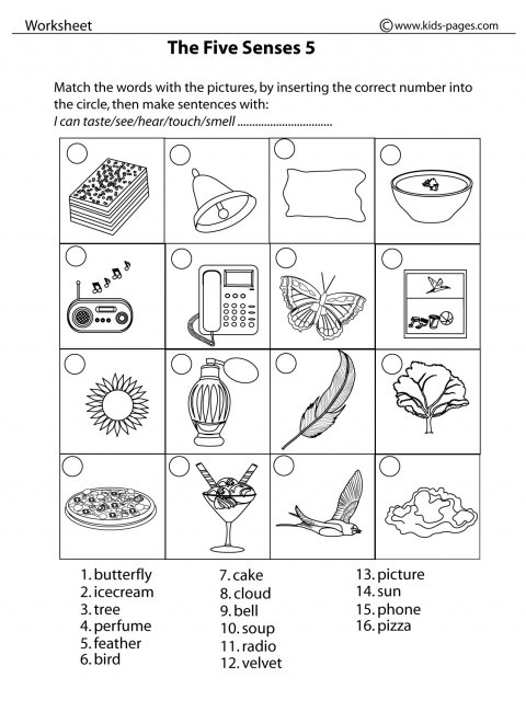 Five Senses Worksheets Kindergarten Five Sense Worksheet New 90 the Five Senses Worksheet Pdf