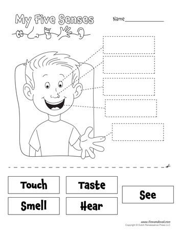Five Senses Worksheets Kindergarten Free Five Senses Worksheets for Kids