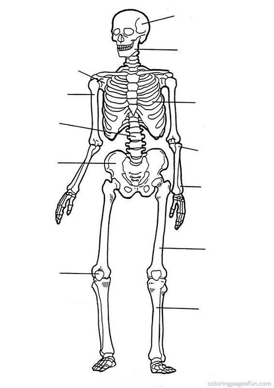 Free Printable Anatomy Worksheets Anatomy Coloring Book Pages Free Printable Coloring Pages