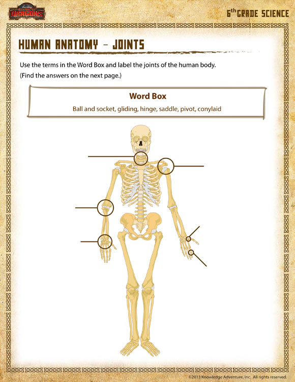 Free Printable Anatomy Worksheets Human Anatomy Joints View – 6th Grade Science Worksheets – sod