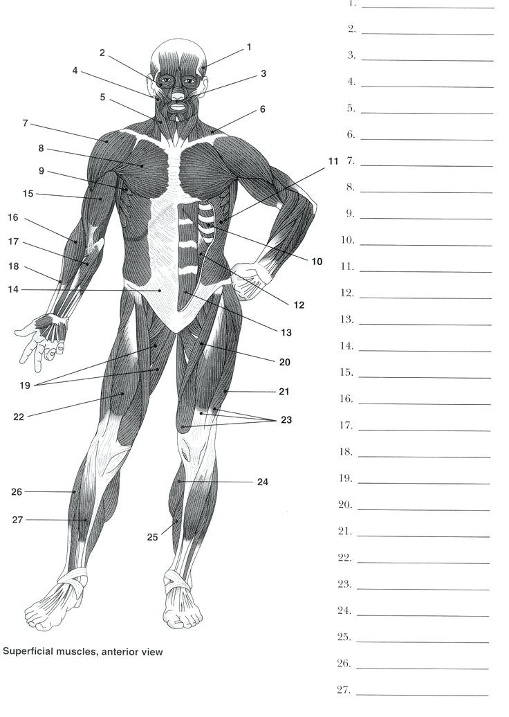Free Printable Anatomy Worksheets Printable Anatomy Labeling Worksheets – Goodaction