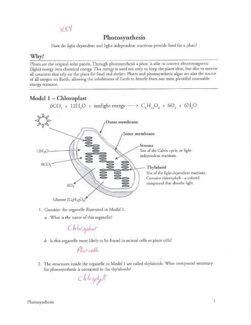 Free Printable Biology Worksheets Pogil Worksheets Biology Worksheets Graphs and Linear