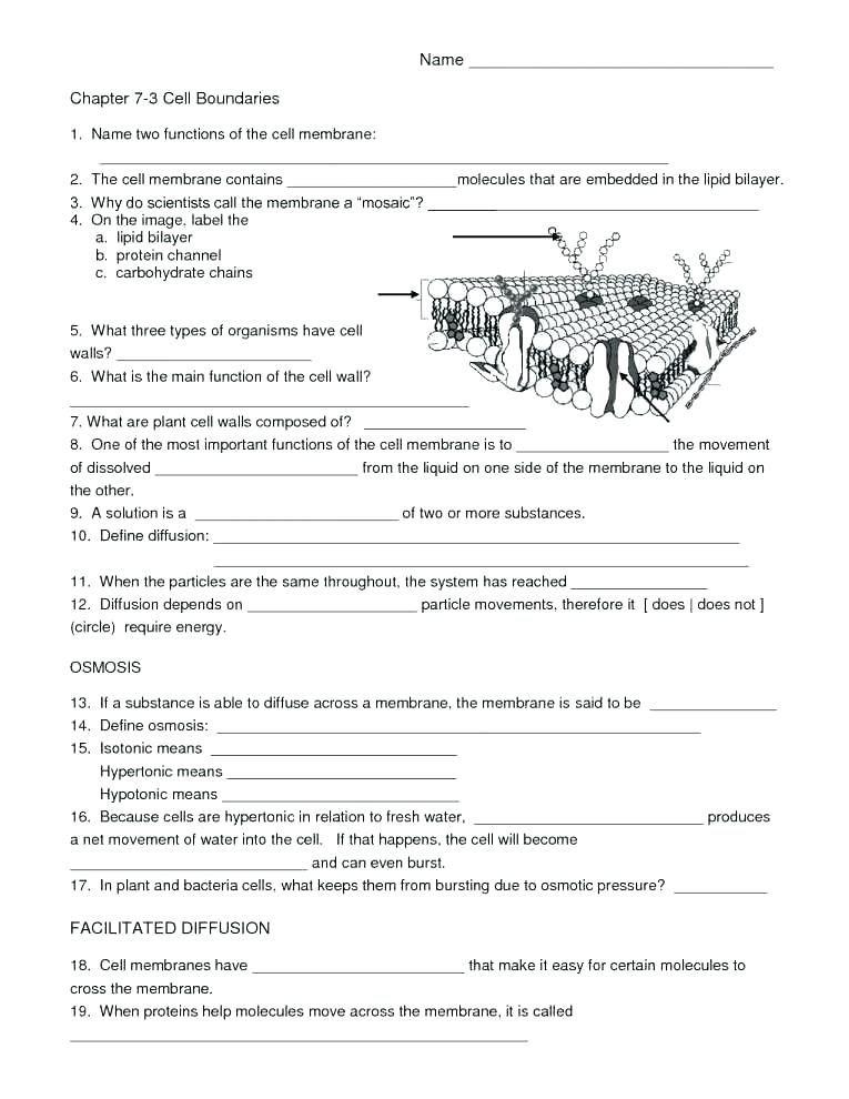 Free Printable Biology Worksheets Ratio Worksheets