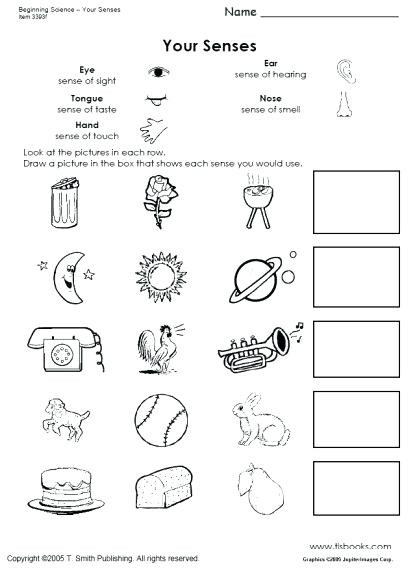 Free Printable Five Senses Worksheets Five Senses Activities for Kindergarten Snapshot Image