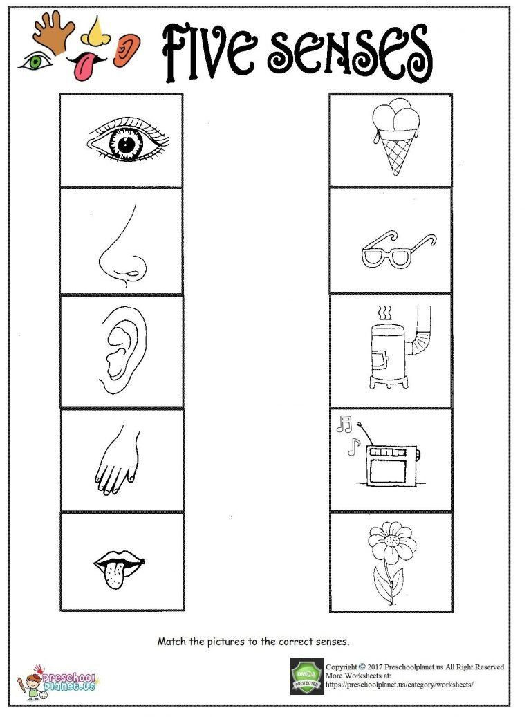 Free Printable Five Senses Worksheets Pin On Printable Worksheet for Kindergarten