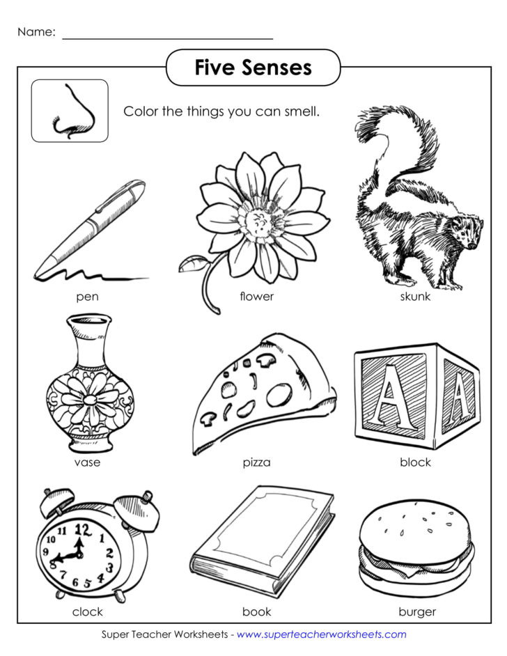 Free Printable Five Senses Worksheets Your Sense Worksheet Printable Worksheets and Activities for