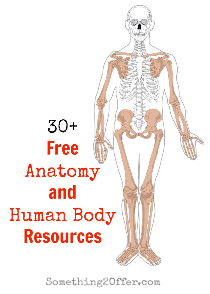 Free Printable Human Anatomy Worksheets Free Anatomy and Human Body Resources