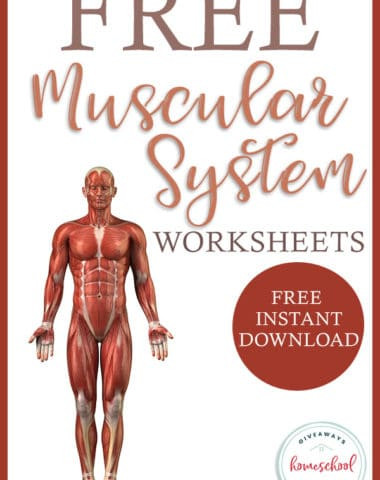 Free Printable Human Anatomy Worksheets Free Human Body Systems Worksheets Archives