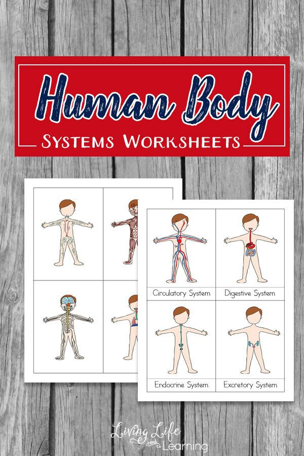Free Printable Human Anatomy Worksheets Free Human Body Systems Worksheets