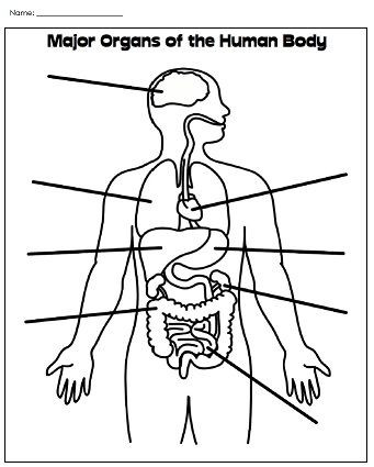 Free Printable Human Anatomy Worksheets Great Worksheets and Lessons but Only A Few are Free Must