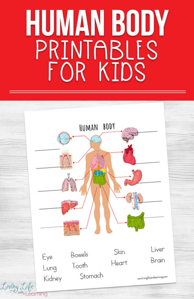 Free Printable Human Anatomy Worksheets Human Body Printables for Kids