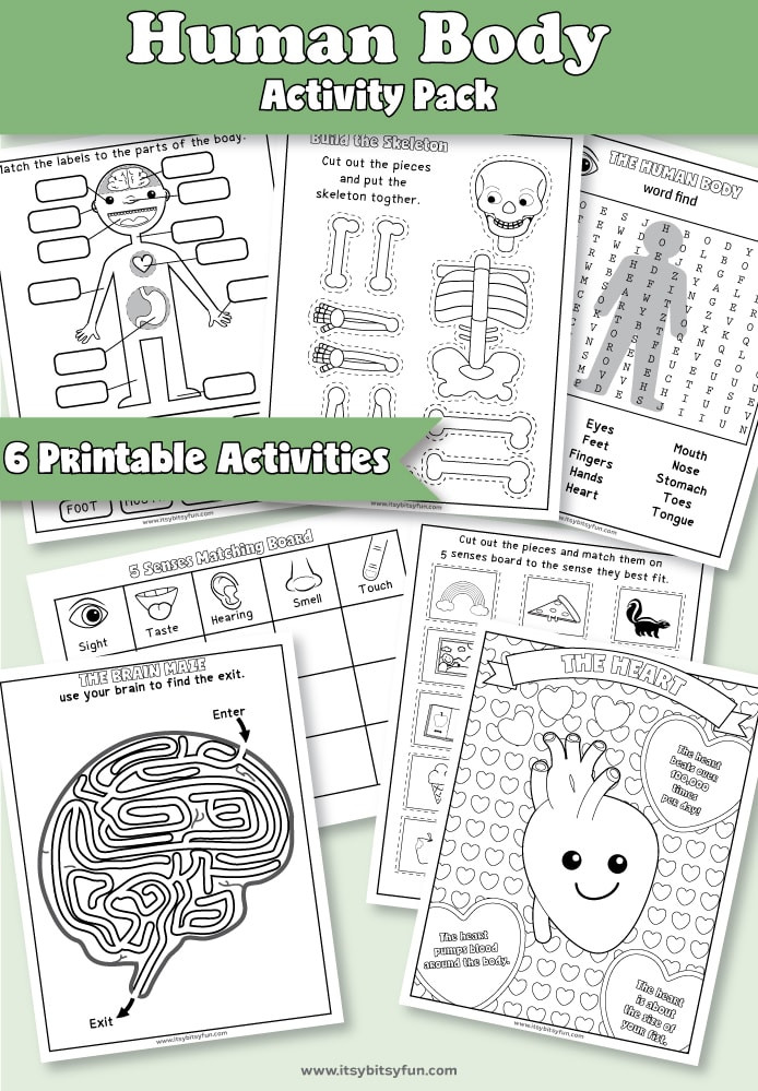 Free Printable Human Anatomy Worksheets Human Body Worksheets Itsy Bitsy Fun
