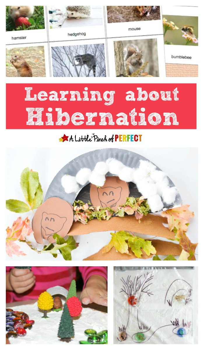 Hibernation Worksheet for Preschool Inviting Ways to Learn About Hibernation for Kids