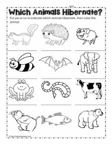 Hibernation Worksheets for Kindergarten Animals that Hibernate