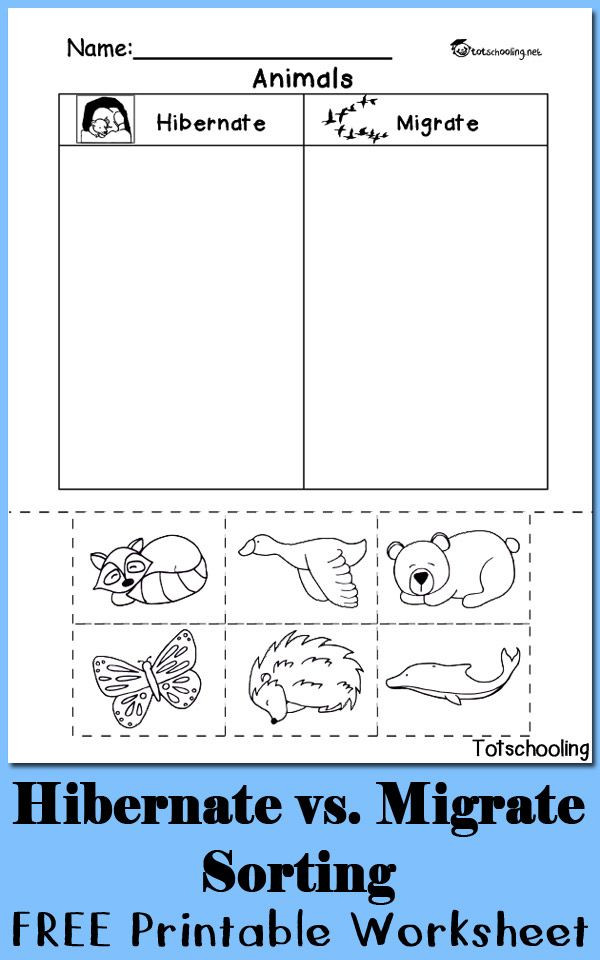 Hibernation Worksheets for Kindergarten Hibernation Vs Migration Animal sorting Worksheet