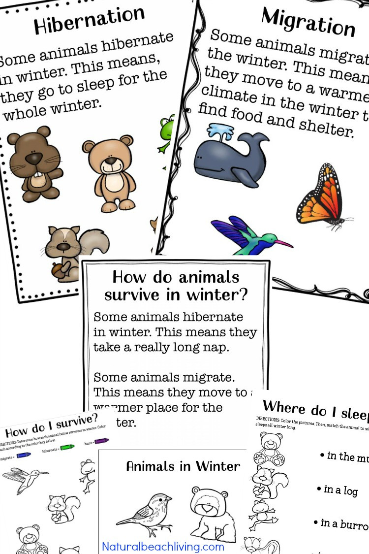 Hibernation Worksheets for Kindergarten Winter Animals for Preschool Activities Natural Beach Living