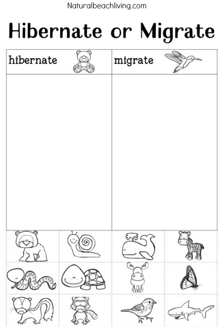 Hibernation Worksheets for Kindergarten You Ll Love these Winter Animals for Preschool Ideas