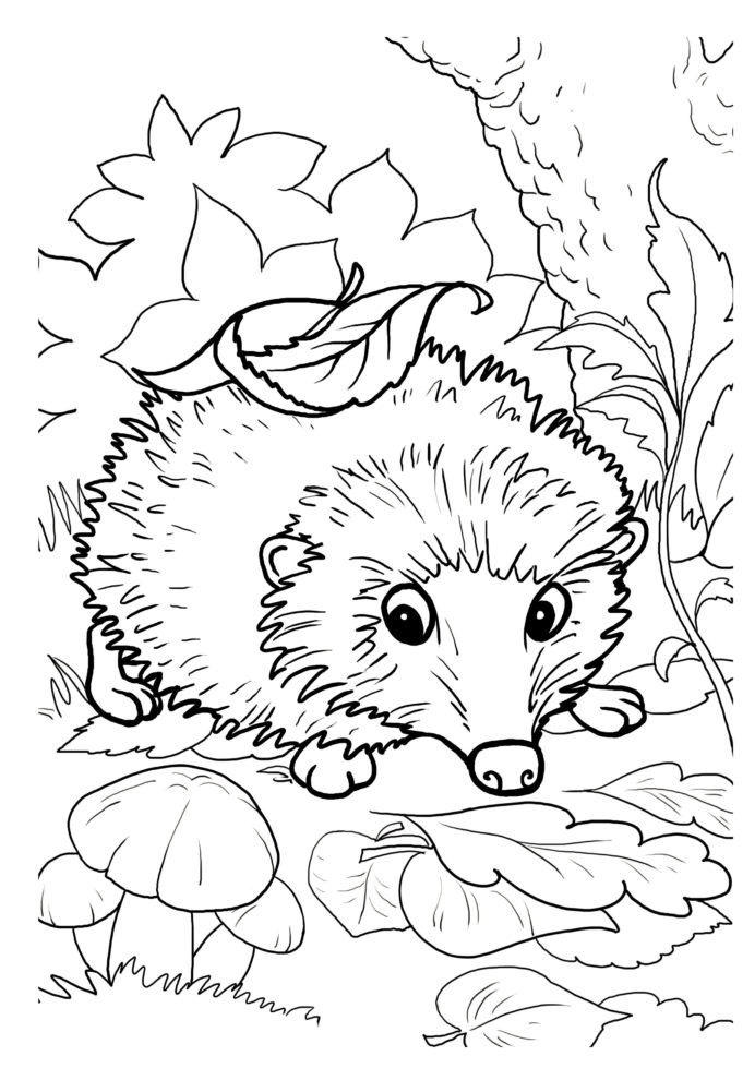 Hibernation Worksheets for Preschool Hedgehogs Free Printable Coloring and Activity for Kids