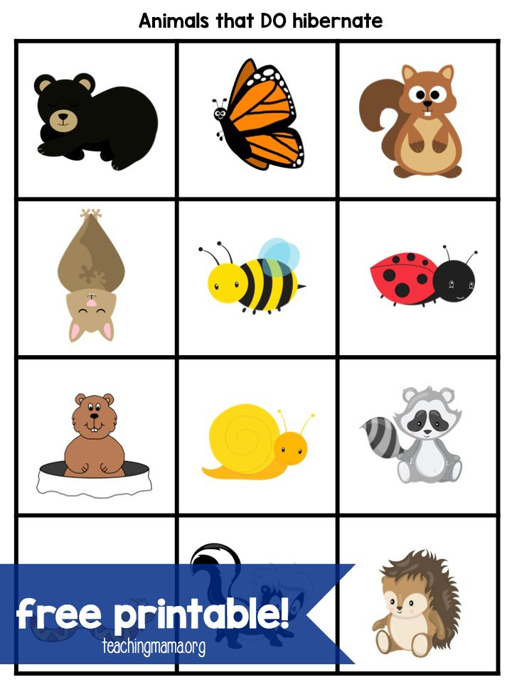 Hibernation Worksheets for Preschool Hibernation Activities for Preschoolers Teaching Mama