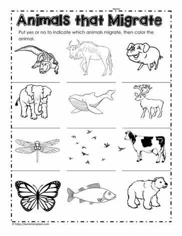 Hibernation Worksheets for Preschool which Animals Hibernate