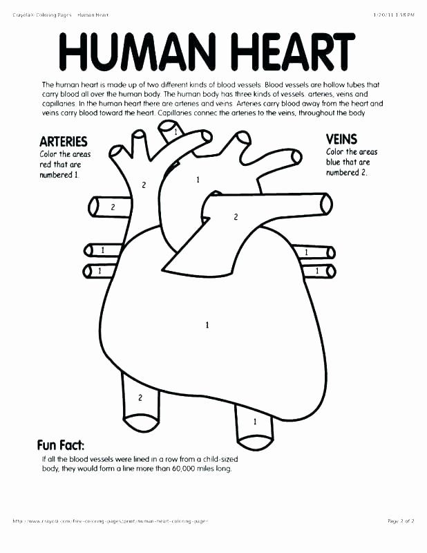 Human Heart Coloring Worksheet 76 Luxury Graphy Anatomy and Physiology Coloring