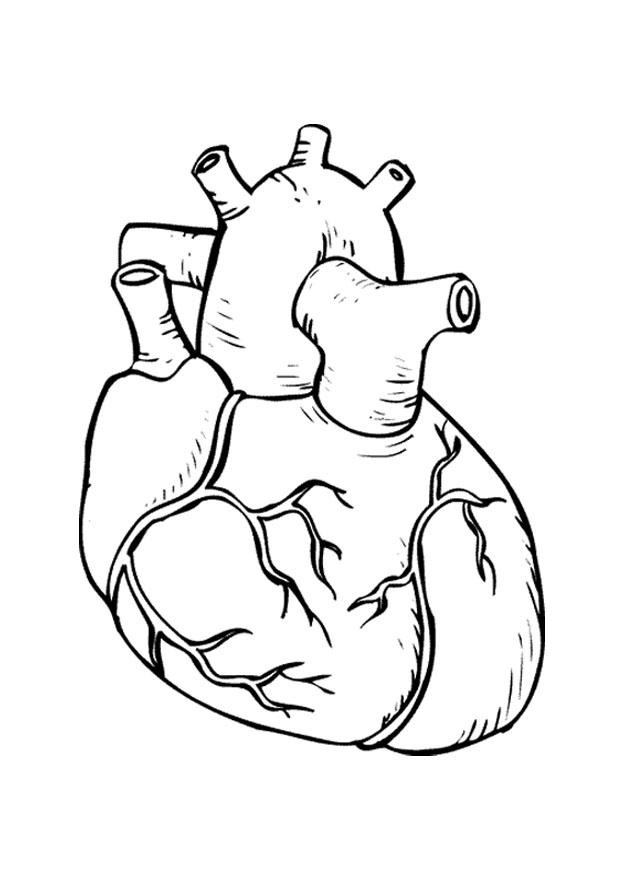 Human Heart Coloring Worksheet Human Heart Coloring Pages Coloring Home