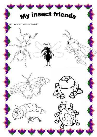 Insect Worksheets for Preschoolers Insects