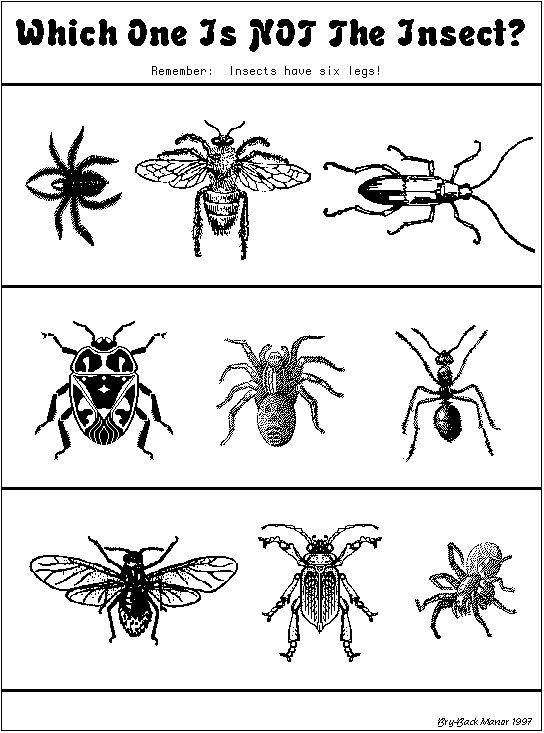 "Insect Worksheets for Preschoolers which One is Not An Insect"" Worksheet"
