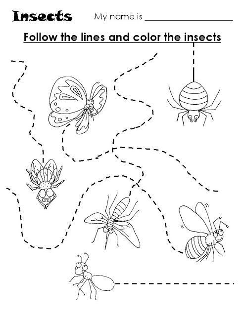 Insects Worksheets for Kindergarten Animal Trace Worksheets for Kids