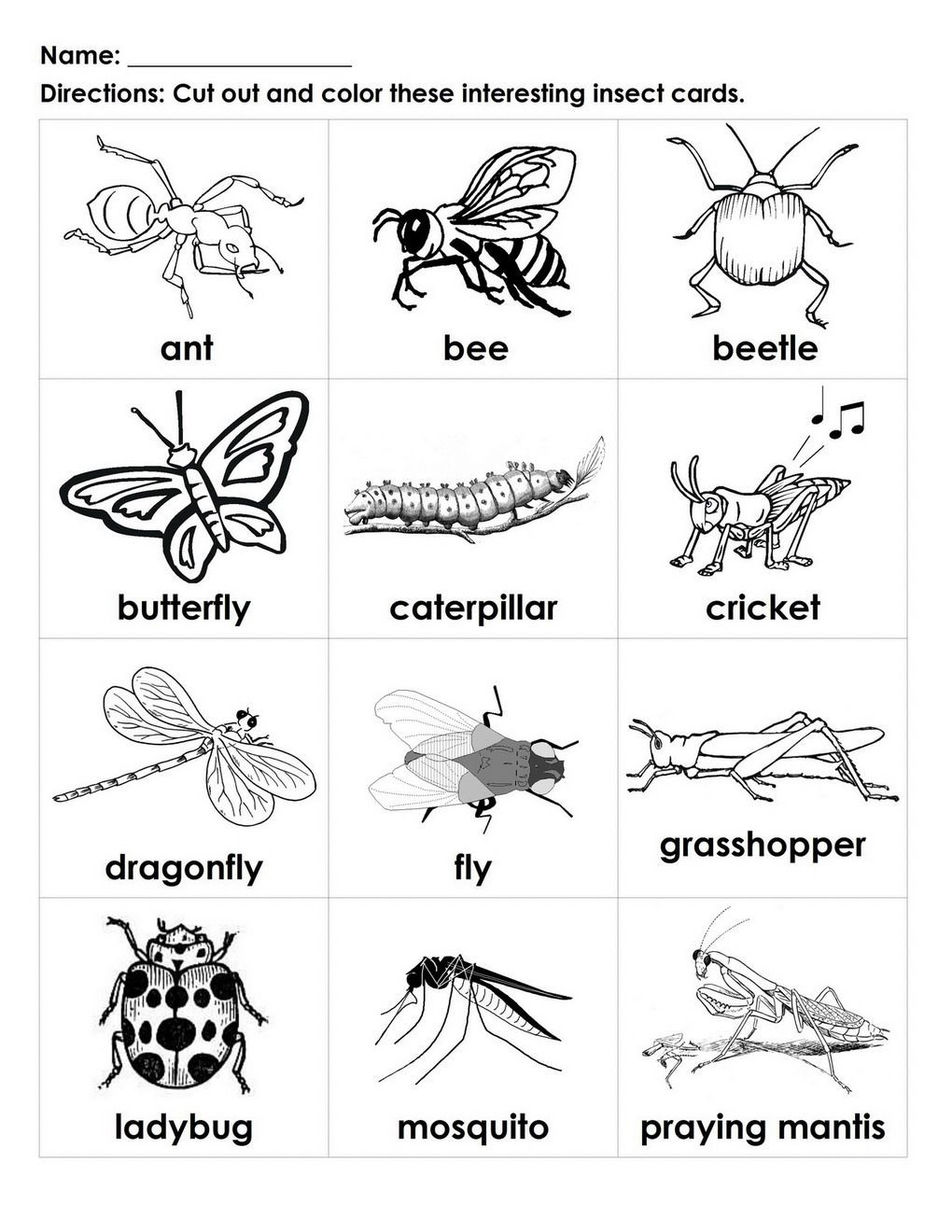 Insects Worksheets for Kindergarten Bugs for Kids to Color