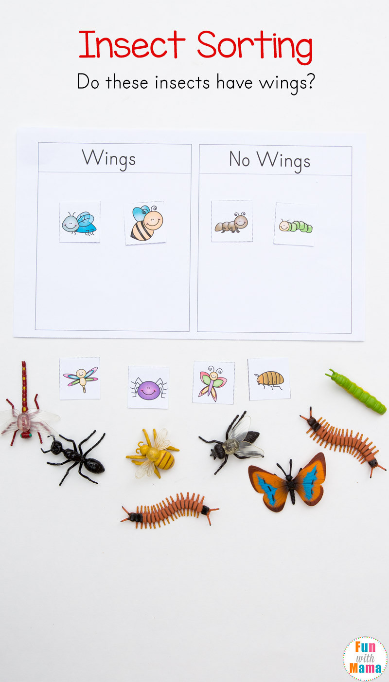 Insects Worksheets for Kindergarten Preschool Insect theme sorting Worksheet Bug Activities
