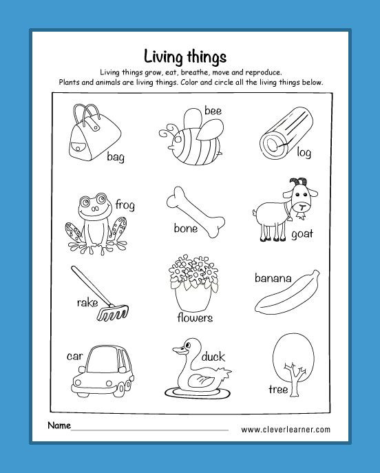 Kindergarten Science Worksheets Am I Living Worksheets for Kindergarten Livingthings