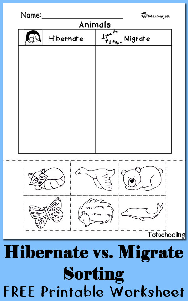 Kindergarten sorting Worksheets Hibernation Vs Migration Animal sorting Worksheet
