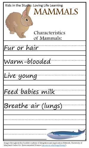 Mammal Worksheets First Grade Animal Classification Mammals Fish