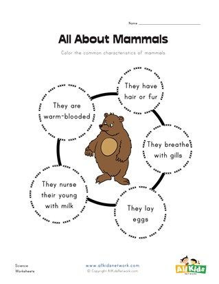 Mammal Worksheets for Kindergarten All About Mammals Worksheet