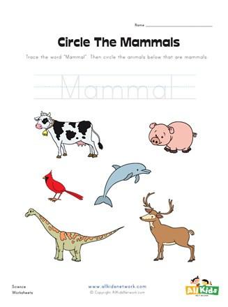 Mammal Worksheets for Kindergarten Circle the Mammals Worksheet