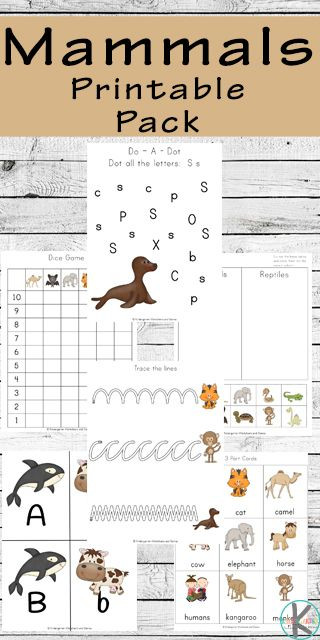 Mammal Worksheets for Kindergarten Free Mammals Printable Pack