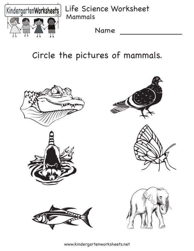 Mammal Worksheets for Kindergarten Life Science Animal Worksheet Mammals Worksheet for