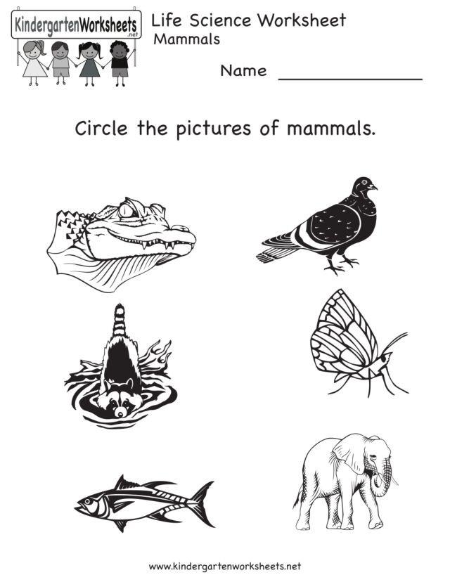 Mammal Worksheets for Kindergarten Life Science Animal Worksheet Mammals Worksheet for