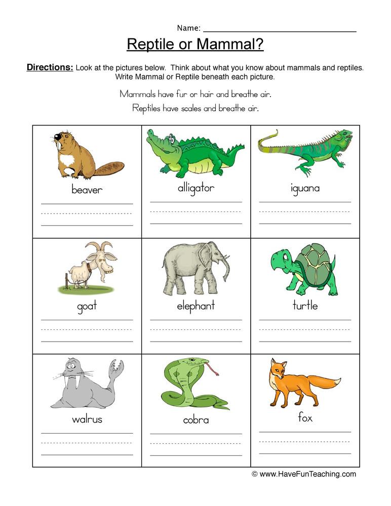 Mammal Worksheets for Kindergarten Mammal Vs Reptile Worksheet