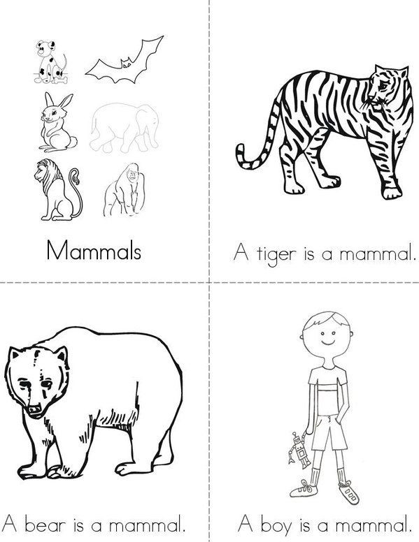 Mammal Worksheets for Kindergarten Mammals Mini Book Sheet 1