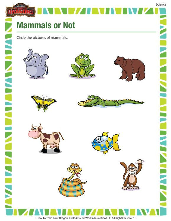 Mammal Worksheets for Kindergarten Mammals Not – Science Printable for Kindergarten