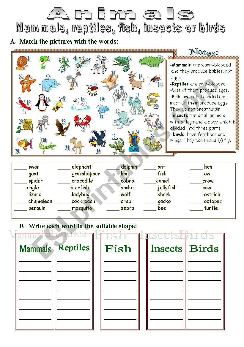 Mammal Worksheets for Kindergarten Mammals Reptiles Fish Insects or Birds Esl Worksheet by