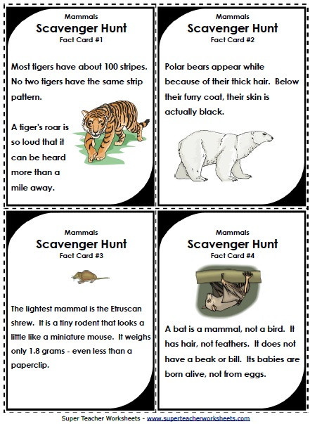 Mammal Worksheets for Kindergarten Science Scavenger Hunts for the Classroom