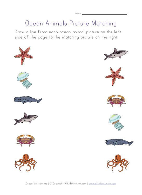 Oceans Worksheets for Kindergarten Printable Ocean Animals Worksheets for Kids