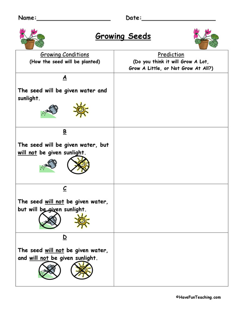 Predictions Worksheets 3rd Grade Plant Predict and Infer Worksheet