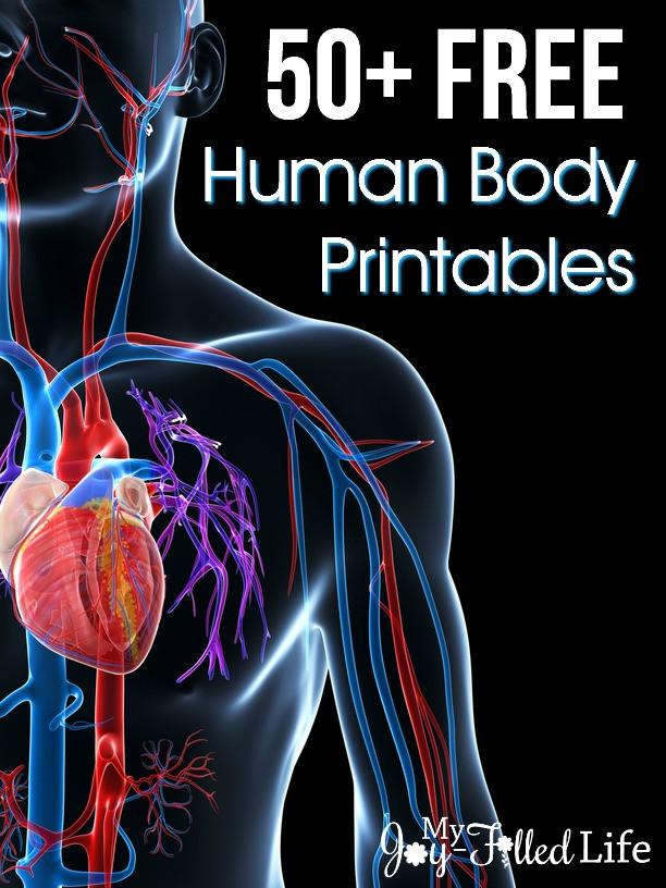 Printable Anatomy Labeling Worksheets 50 Free Human Body Printables My Joy Filled Life